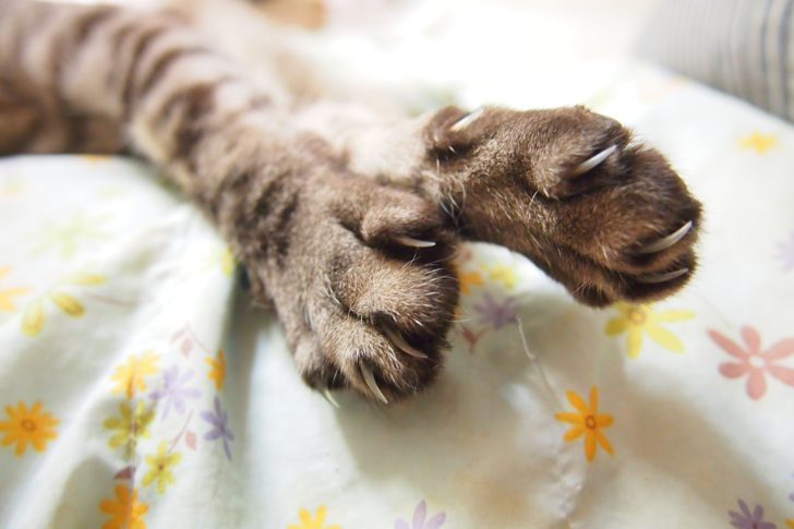 猫に攻撃されたりひっかかれる夢は、危機の予兆です。
